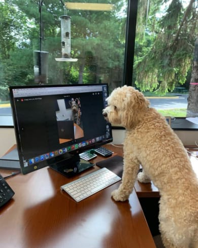 Dog video conferencing with another dog